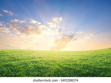 summer sunset over green grass field.