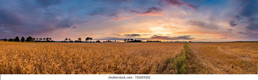 Summer sunset over wheat field. Beautiful sunset sky over countryside.