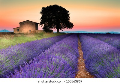 Summer sunset in Valensole.Provence,France.