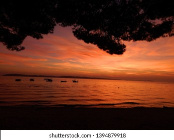 Summer sunset view of the Croatian Brijuni island with sailboats, from the Adriatic coast of the Istrian peninsula, made under a coastal pine tree branch on a beach