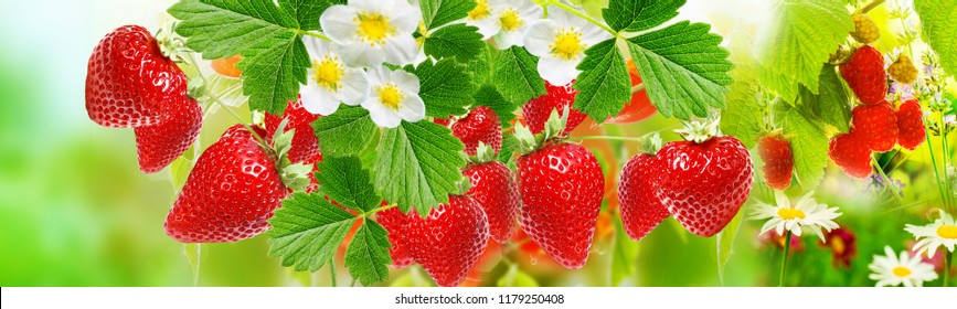 summer sweet ripe berries