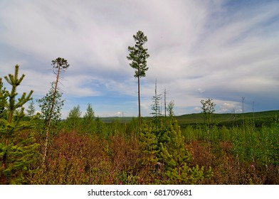 Summer in the taiga. Amur region. Russia.