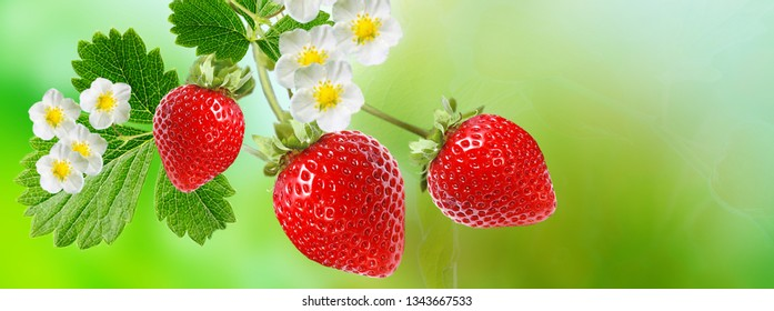 summer tasty red fresh strawberry