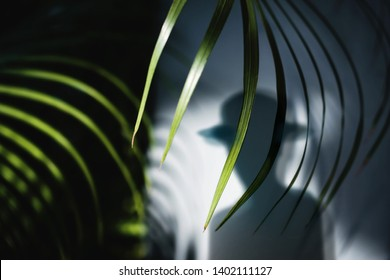 Summer Time Concept. Shadow of a Man in Fedora Hat and Areca Palm Leaf Shading to the Wall. Selective Focus