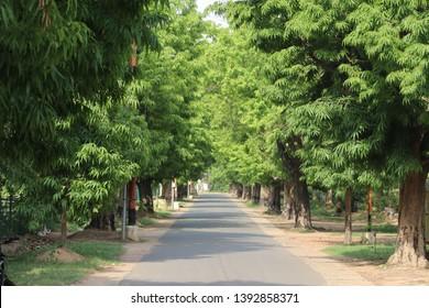 Summer Time in Visva-Bharati Santiniketan