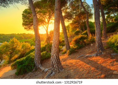Summer tropical forest. Spain, Costa Dorada coastline, Salou. Pine forest at the sea at dawn. Summer nature.