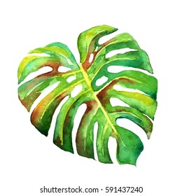 Summer tropical  of palm leaves, tropical palm leaves, summer background,Green leaves of palm tree on white background