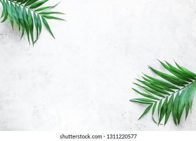 Summer tropical palm leaves flat lay on white background with copy space, blank design, minimal concept.