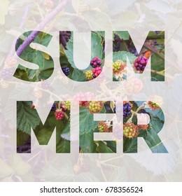Summer typography design on wild blackberries background.