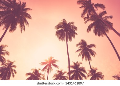 Summer vacation and nature travel adventure concept. Tropical palm tree on sunset sky and clouds abstract background. Vintage tone filter effect color style.