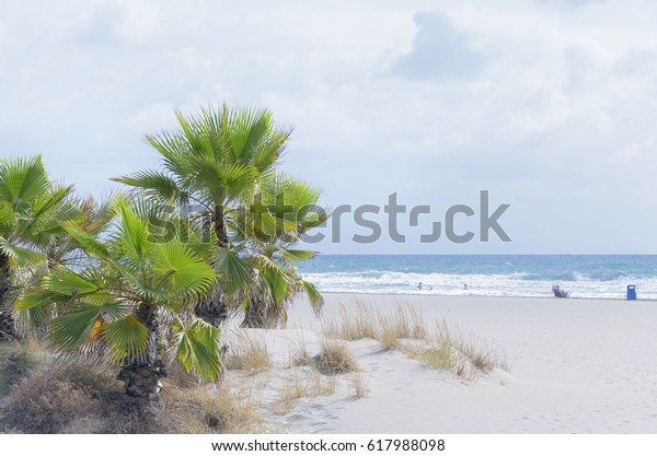 Summer vacations at the beach of Castellon de la Plana (Valencia - Spain). Palm trees, with green leaves, at the foreground. People sunbathing and enjoying of the environment. Mediterranean sea.