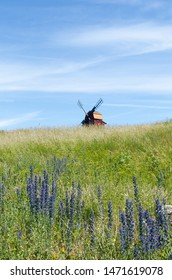 Summer view with blossom blueweed flowers and an old windmill at the island Oland in Sweden
