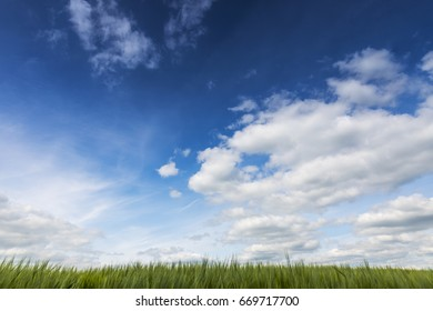 A summer view of a field looking up to the sky and clouds