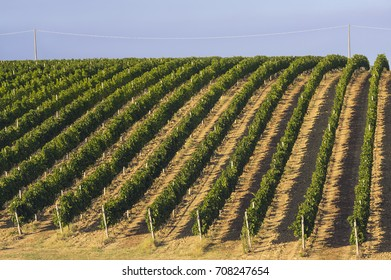 Summer vineyard farm in Abruzo, Italy, Europe