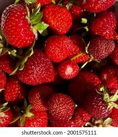 Summer warm strawberries just picked from the kitchen garden