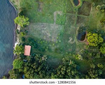 Summer warm sun light forest aerial view