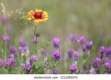 summer wild flowers on meadow