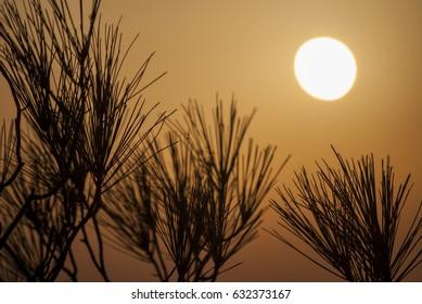 summer wild grass at sunset, summer time