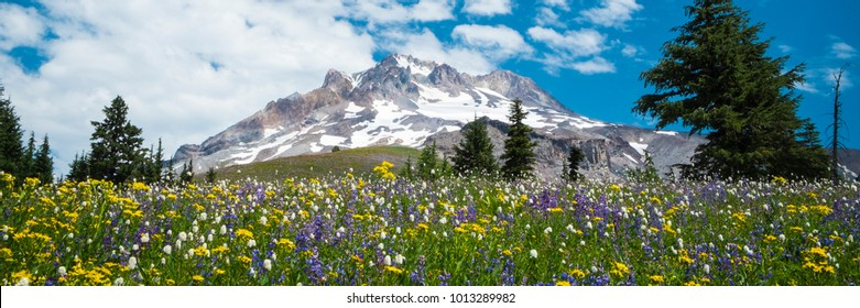 Summer wildflowers beneath the blue sky, Mt. hood, Oregon Cascades