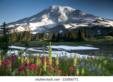 Summer Wildflowers, Mazama Ridge Mt. Rainier National Park
