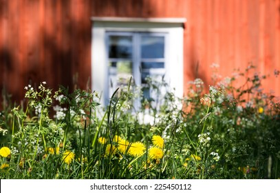A summer window in Finland