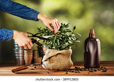 Summer work in the garden. Woman cutting a beautiful pot flower at home. Concept photograph for background or advertising.