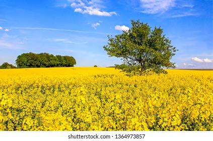 Summer yellow field flowers landscape. Yellow meadow flowers scene. Yellow flowers meadow view. Summer meadow yellow flowers view