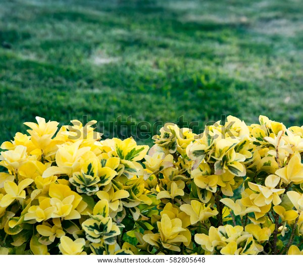 summer, yellow flowers on blurred background of grass