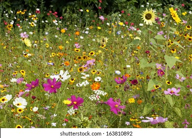 Summerly Flowerfield
