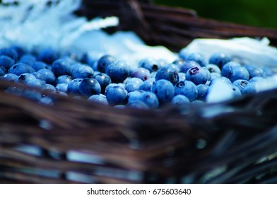 Summertime Blueberry Picking So Delicious and Nutritious!