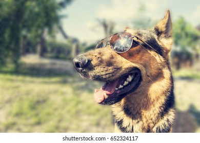 Summertime. Dog on a party. Dog in sunglasses. Happy dog looking for a adventure