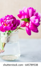 Summertime floral concept with bright purple peonies on concrete background with copyspace