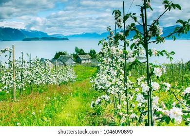 Summertime in Nordheimsund near Bergen in Norway