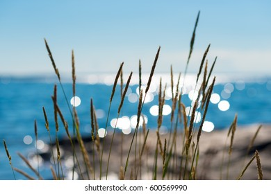 Summertime reeds against glittering sea