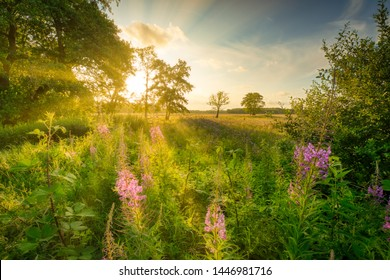 Summertime in a rural countryside landscape with a lush green field, flowerrs and bright sunshine with a blue sky - Drenthe, The Netherlands