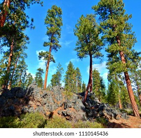 Sumptuous Sunshine Setting - Ponderosa pine forest and rock formations just off of Cold Spring Cutoff - west of Sisters, OR