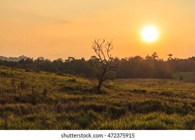 Sun was about to set at grassland area of Khao Yai national park, Thailand.