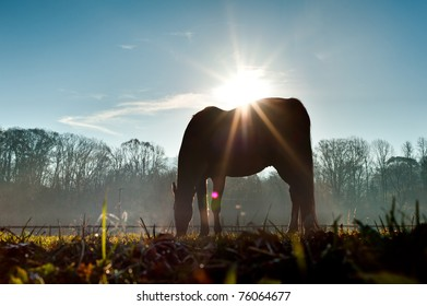 Sun above horse from low angle.