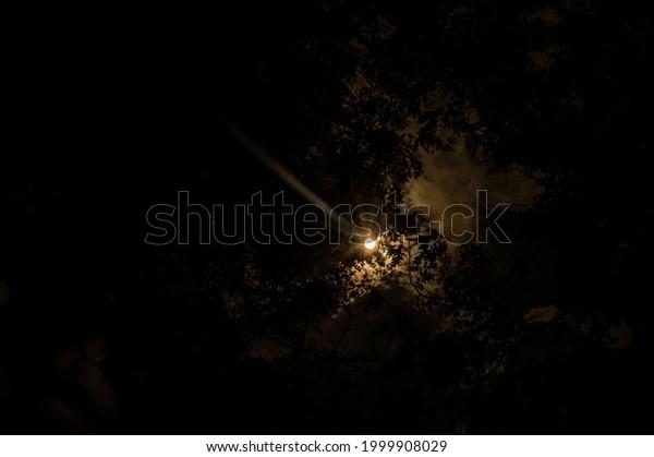 sun-among-branches-dark-sky-600w-1999908
