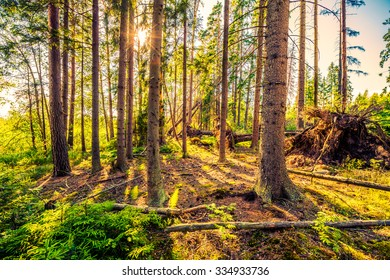 Sun in ancient forest. Image in the orange-blue toning