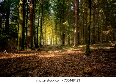 Sun in the Autumn in the bavarian forest with great sunlight