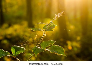 Sun in Autumn in a Forest in Germany