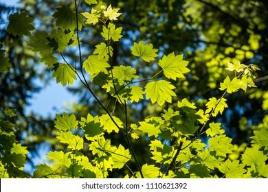 sun back lit the green leaves inside forest bottom view