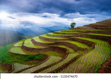 Sun beam at rice field in Thailand