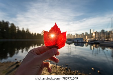 A sun beam through a leaf overlooking vancouver's coal harbour