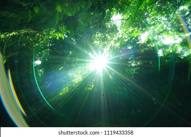 Sun beam with woods at island