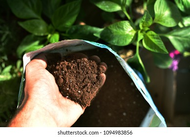 Sun beaming in with hand grasping soil. Planting green vegetables during spring.