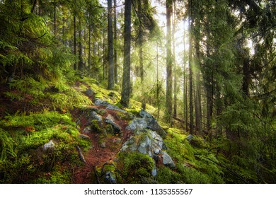 Sun beams in the deep amazing forest with fog in the early autumn morning.