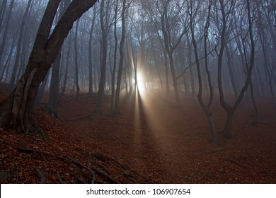 Sun beams in fogy and scary forest
