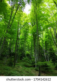 Sun beams going through thick tree branches in dense green forest, natural wallpaper, texture